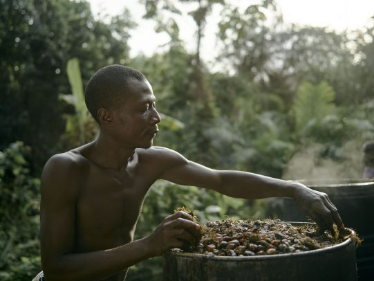 man working on palm tree kernels