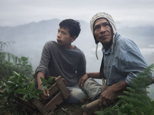 father and son working together in a coffee plantation for Lavazza Calendar 2016 by Joey L