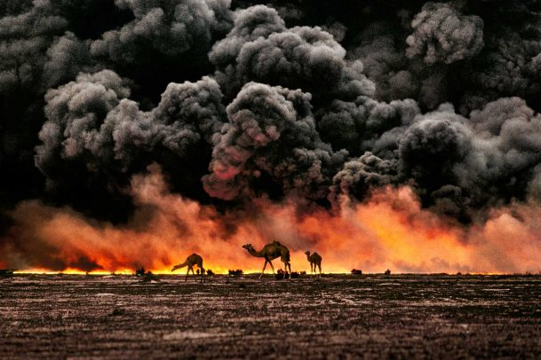 camels search for untainted shrubs and water in the burning oil fields of southern Kuwait