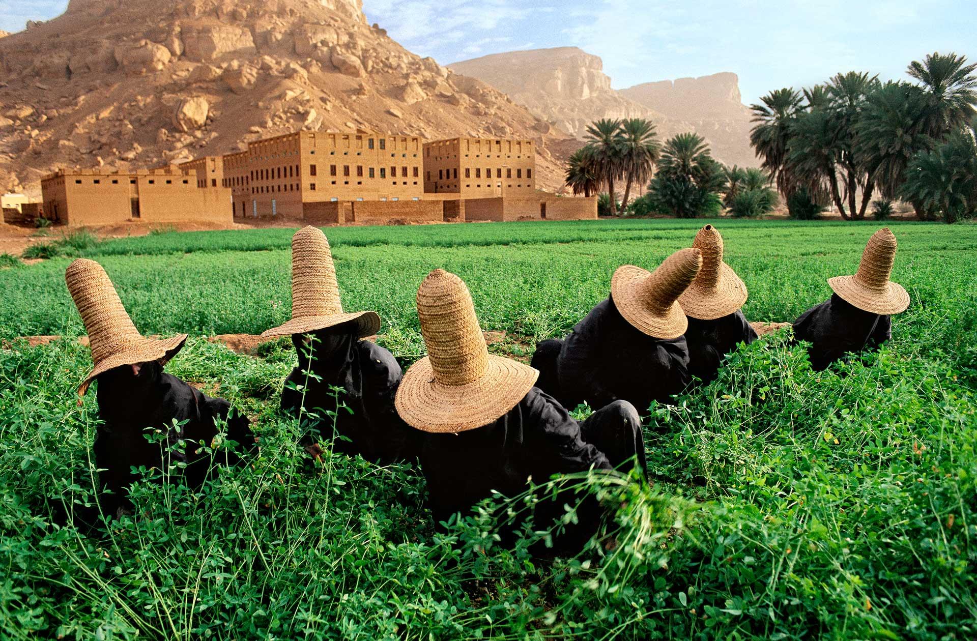 Clover gatherers in Yemen