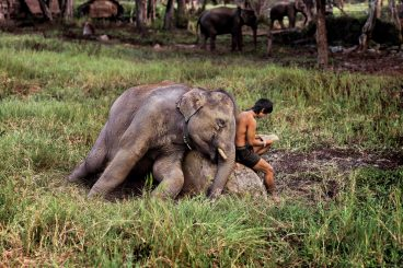 Elephant and man reading