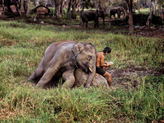 Elephant and man reading