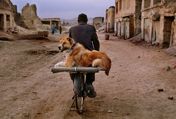 man riding a bike with his dog