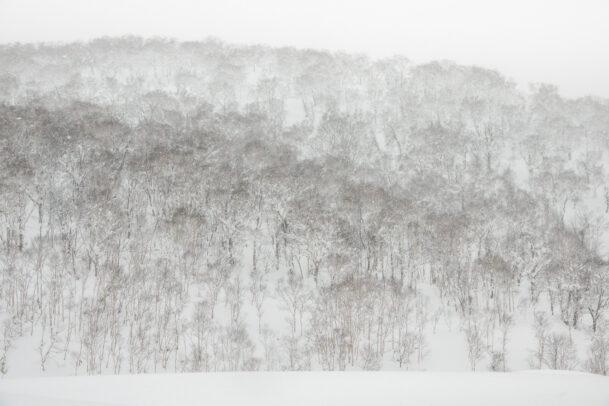 snow landscape by michael yamashita