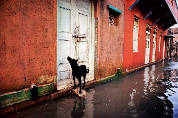 dog looking at a door