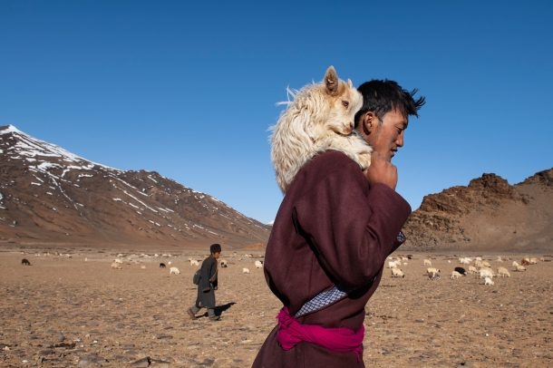Shepard with a goat on his shoulder