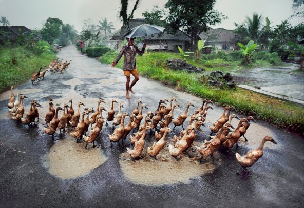 Ducks on a street