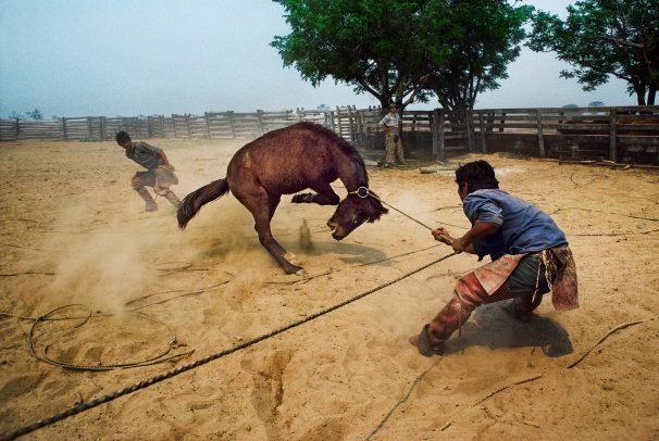 men taming a horse