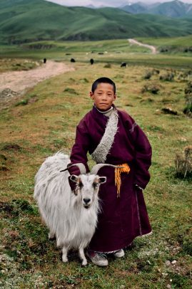 tibetan boy with his goat