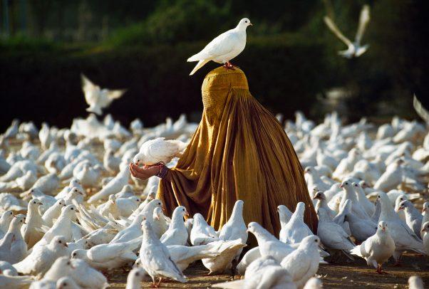 woman with burqa feeding doves