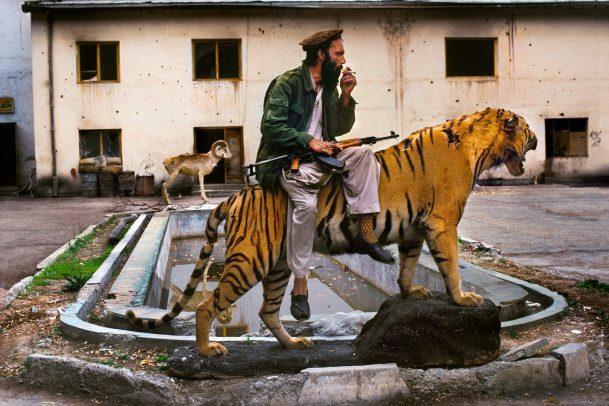 man on a tiger
