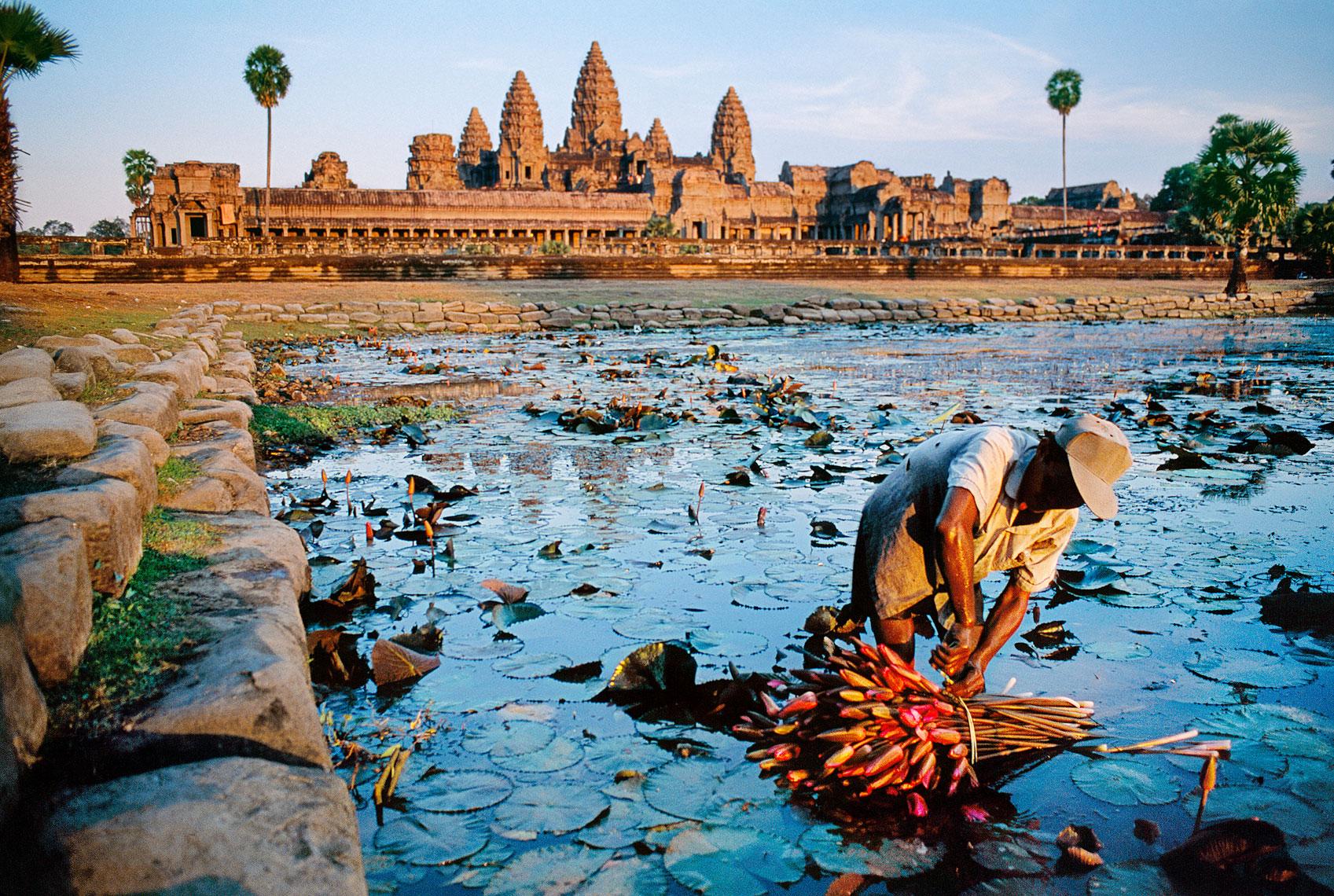a man gathering lotus in Angkor Wat