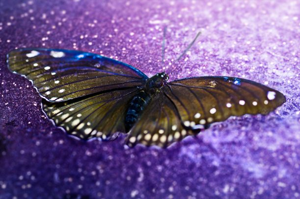 yellow butterfly on a purple background