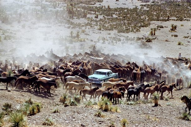 a herd of horses around a fifties blu car
