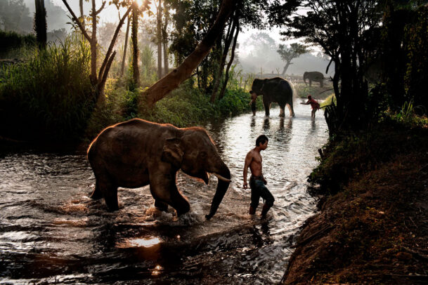 Boy and elephant crossing stream