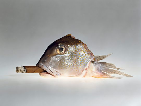 head of a fish with a cigar