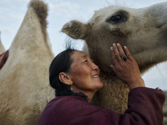 a mongolian women petting her camel during Novartis annual report by Joey L.