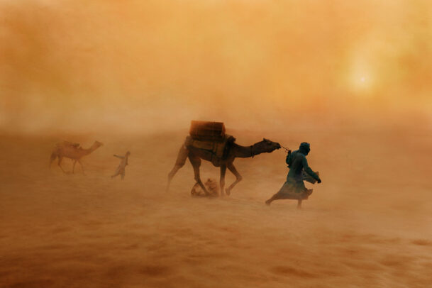 Camels in Dust Storm.
