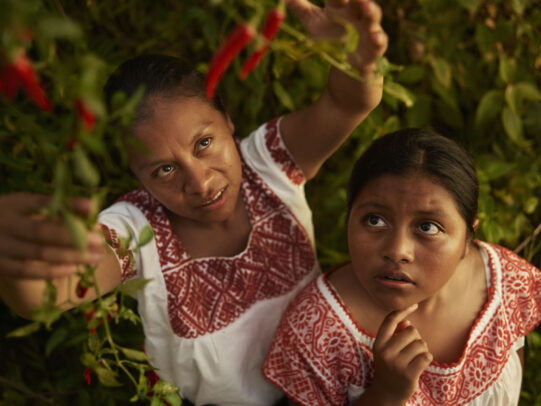 a woman picking chili peppers and another watching for Lavazza Calendar 2016 by Joey L