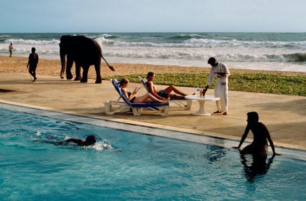 tourist lounge poolside as elephant passes