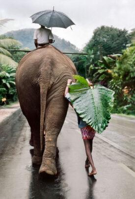 A young man walks behind an elephant