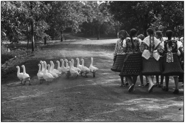 a group of girls besides a group of geese