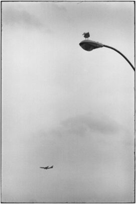 a seagull on streetlight and a plane on the background