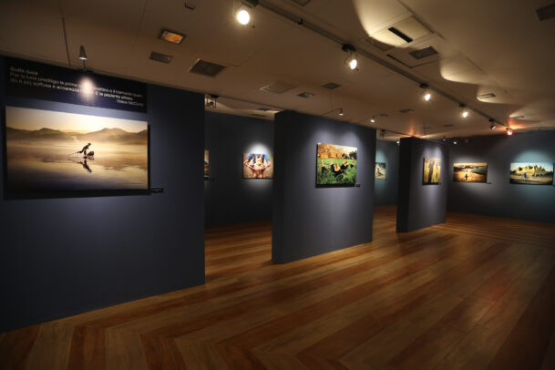 Installazione mostra McCurry Icons Campobasso