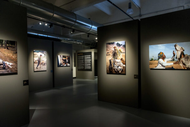 McCurry Animals MUDEC Installation