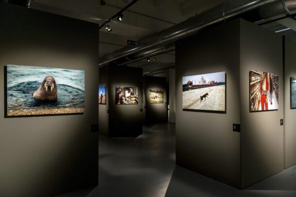 McCurry Animals MUDEC Installation