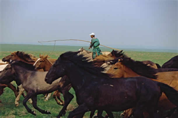 a cowboy rounds up horses Sitting tall in a Mongolian saddle