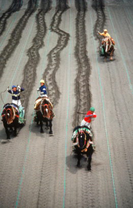 Draft Horse Racing