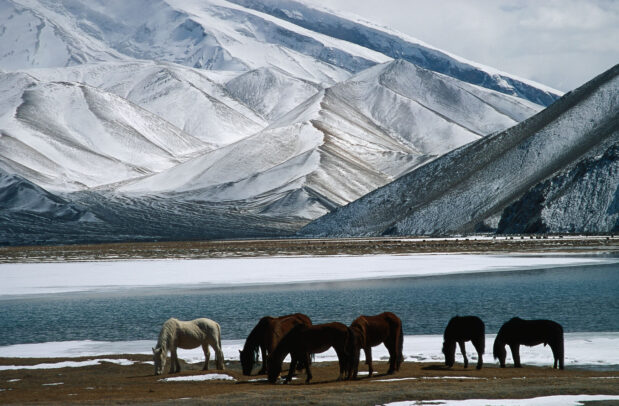horses near a river with snow mountain on the background
