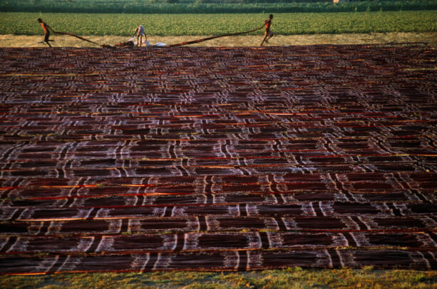 Freshly-dyed cotton is laid out to dry in a field in Gujarat