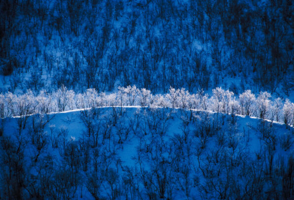 trees in snow in Trangdalen, Norway