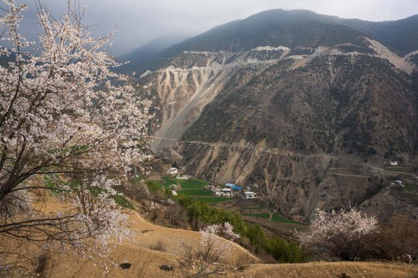 village in a valley of the Yunnan province and a blossom cherry tree