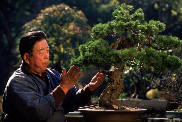 man taking care of a bonsai