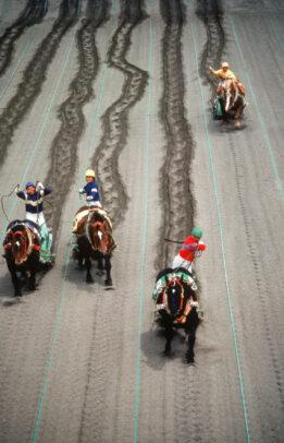 Draft Horse Racing