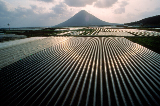 hothouse of rice in Japan