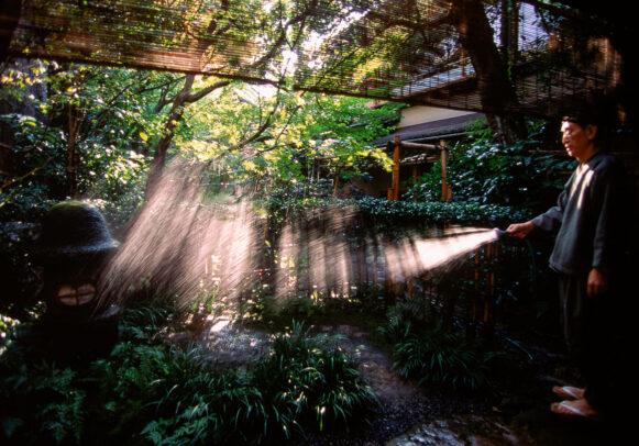 man watering a japanese garden