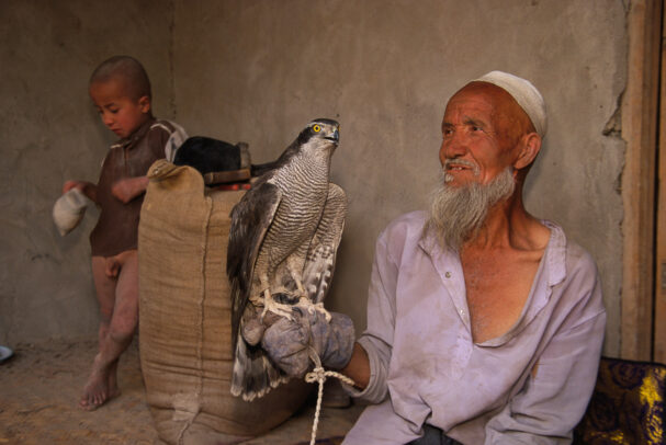 A chinese falconer with his falcon