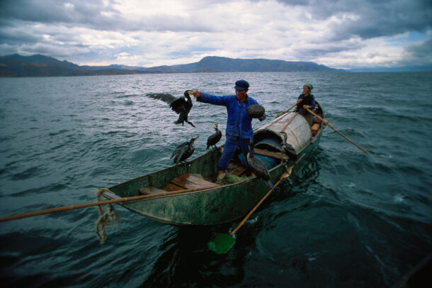 Cormorant fishermen on Erhai Lake