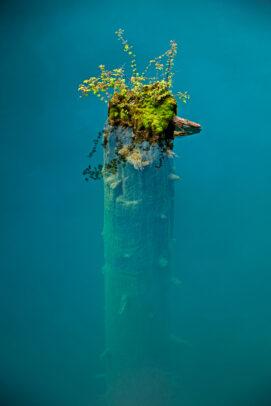 A haphazard flourish of hardy plants caps a broken tree trunk submerged in Panda Lake. Jiuzhaigou Nature Reserve, China.