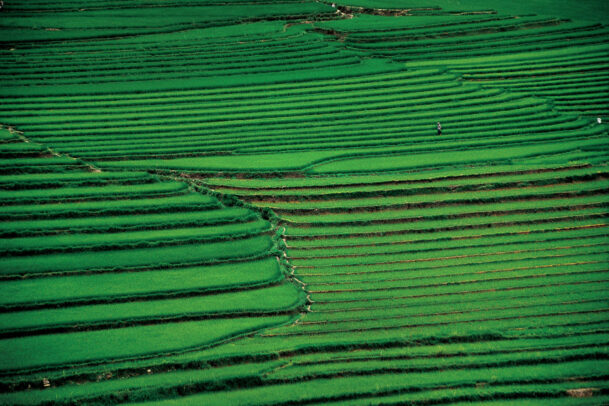 the terraced rice paddies of the landlocked province of Yunnan
